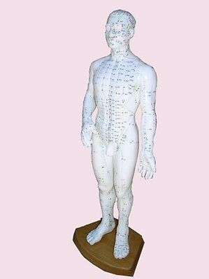 """Acupuncture Model/Chart/ Book Male Acupuncture Model 20"""" with Chinese and"""