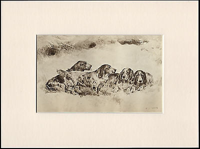 Cocker English Field Spaniels Dogs Antique Dog Print By Wardle Ready Mounted