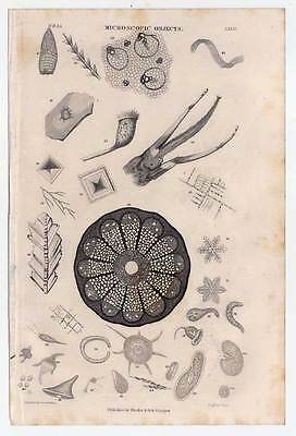 Mikroskopie-Microscopic Objects - Stahlstich 1862