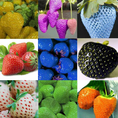 10 colors 200/color Strawberry Seeds Red Black Blue Everbearing Fruit Plants