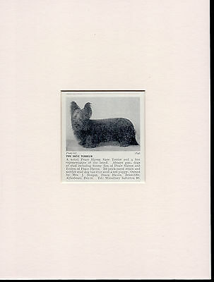 Skye Terrier Old Vintage 1930's Named Dog Print Mounted Ready To Frame