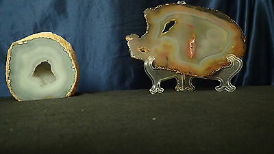 Polished Vibrant  Petrified Wood Round reduced lot of two
