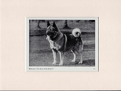 Norwegian Elkhound Old Vintage 1940's Named Dog Bookplate Print Ready Mounted