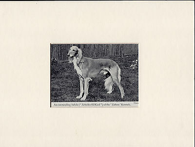 Saluki Old Vintage 1940's Named Dog Bookplate Print Ready Mounted