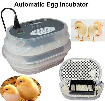 New Digital Full Automatic 12 Eggs Incubator Poultry Turner Quail +candler gift