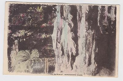 The Flamingo Naracoorte Caves OLD photo POSTCARD 1905 South Australia