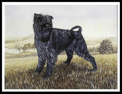 Affenpinscher Charming Image Standing Dog On Print Poster