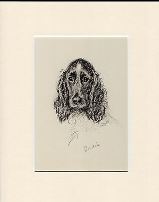 Cocker Spaniel Old Vintage 1930's Ready Mounted Lucy Dawson Dog Art Print
