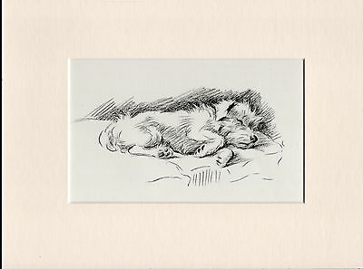 Jack Russell Sleeping Lovely Old 1930's Ready Mounted Lucy Dawson Dog Art Print