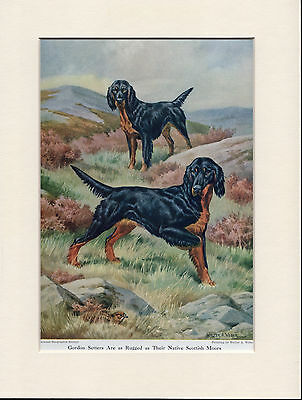 GORDON SETTER 1950'S READY MOUNTED DOG ART PRINT by WALTER A WEBER