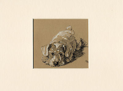 Sealyham Terrier Charming 1934 Cecil Aldin Dog Art Print Ready Mounted
