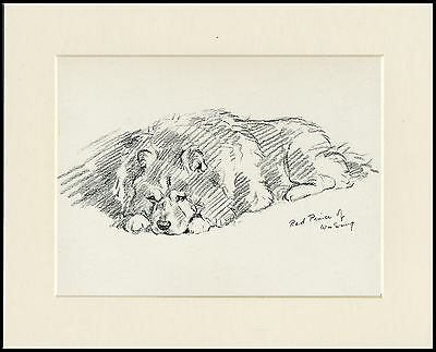 CHOW CHOW LOVELY 1930'S DOG ART SKETCH PRINT by MAC LUCY DAWSON READY MOUNTED