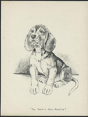 BEAGLE PUPPY SEATED CHARMING VINTAGE 1930'S DOG ART PRINT by KF BARKER