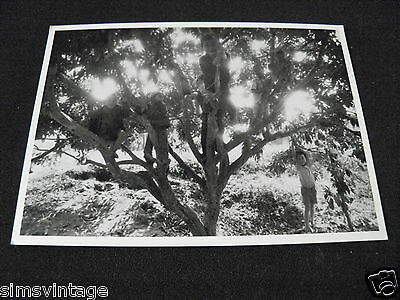 Unusual Weird B Postcard Thailand 1987 children in tree