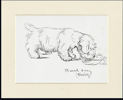 Sealyham Terrier Busy Eating Old 1930's Ready Mounted Lucy Dawson Dog Art Print