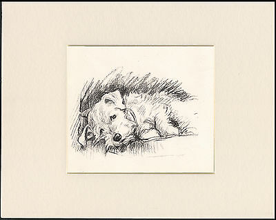 SEALYHAM TERRIER LOVELY OLD 1930s READY MOUNTED LUCY DAWSON DOG ART PRINT