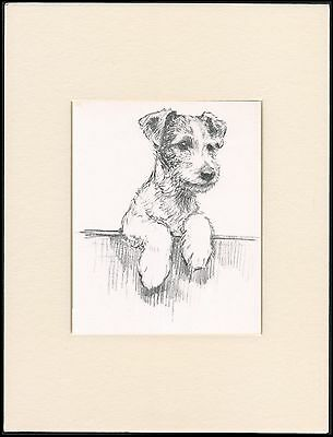 WIRE FOX TERRIER LOOKING OVER FENCE 1930'S DOG ART PRINT by KF BARKER MOUNTED