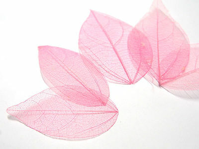 12p x Pressed Dried Leaf-Magnolia denudata (Pink) specimen (phonecase,bookmark