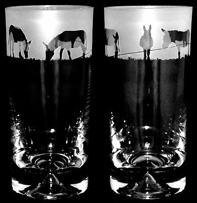 *DONKEY GIFT* Boxed Pair HIGHBALL TALL TUMBLERS with DONKEY FRIEZE