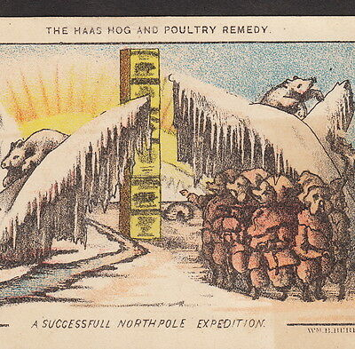 Dr Haas Hog Cure North Pole Arctic Expedition Polar Bear Advertising Trade Card
