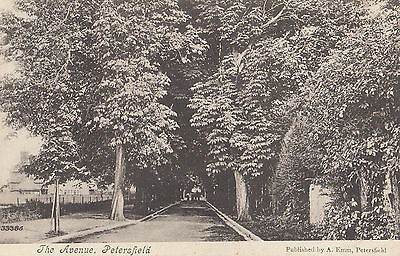 PETERSFIELD ( Hampshire) : The Avenue  -EMM