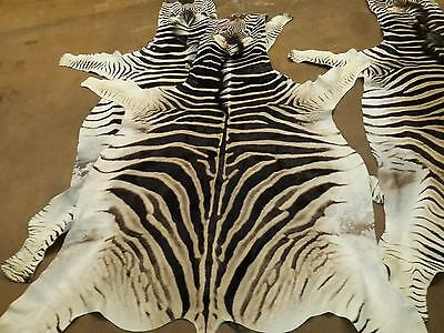 10% OFF !!! Zebra Skins Hides Burchell A+ Grade Best in the country