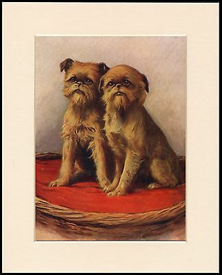 Brussels Griffon Two Seated Dogs Charming Dog Print Mounted Ready To Frame