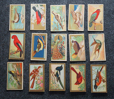 Lot of 15 Mecca Cigarettes Birds Series Trading Cards