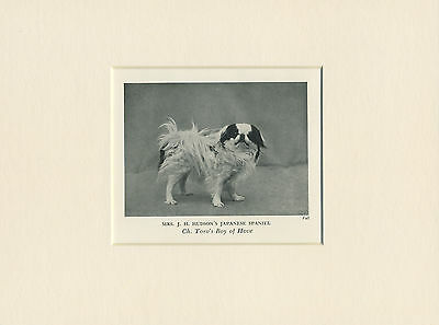 JAPANESE CHIN ORIGINAL VINTAGE 1930's OLD NAMED DOG PRINT READY MOUNTED TO FRAME