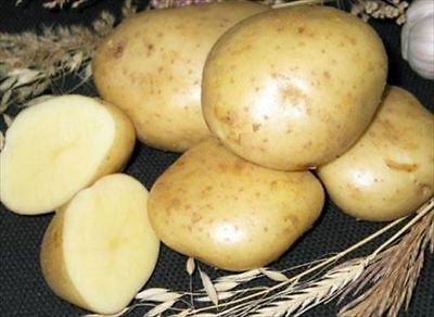 Best Seeds Of Potato seeds Empress Vegetable 30  seeds + Free delivery