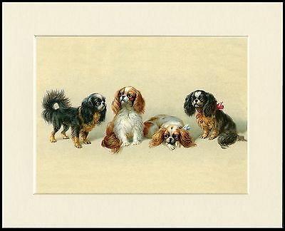 Cavalier King Charles English Toy Spaniel Dogs Lovely Dog Print Ready To Frame