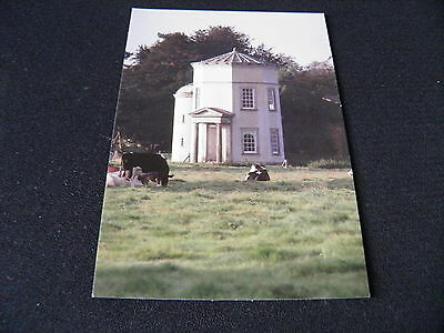 Staffordshire B Postcard Shugborough Cattle
