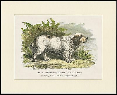 Clumber Spaniel Vintage Style Named Dog Print Mounted Ready To Frame
