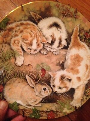 Royal Worcester Kitten Encounters Pam Cooper Plate Picture Bunny Cats Rabbit