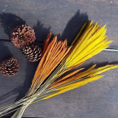Dried Natural Grass Flowers