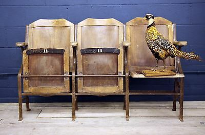 Vintage Cinema Seats Antique Haberdashery Chairs French Parisian 19th Century