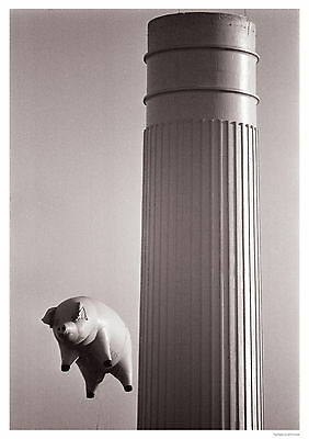 Pink Floyd pig Poster A1 Size 84.1cm x 59.4cm - approx 33 inches x 24 inches