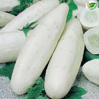 Pepino White Wonder ( 80 semillas ) seeds - Pepino Blanco