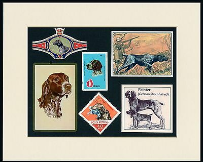 German Shorthaired  Pointer Mounted Set Dog Collectable Cards Stamps And Bands
