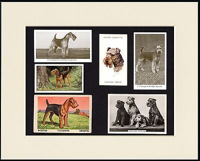Lakeland Terrier Mounted Set Of Vintage Dog Collectable Cards Great Gift