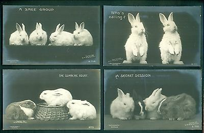 1906 Rotograph Co. Real Photographs on Bromide Paper Bunny Rabbit Postcards