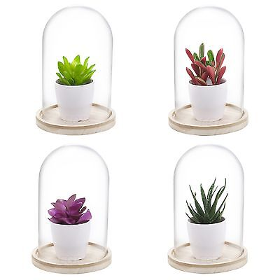 Artificial Plant In Glass Dome Bell Jar Display Decorative Wood Base Vintage NEW