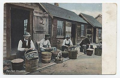 The Clam Shuckers NEW ENGLAND c1907 Postcard