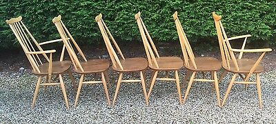 Superb Set Of 6 Retro Ercol Goldsmith Dining Chairs, Mint Condition,
