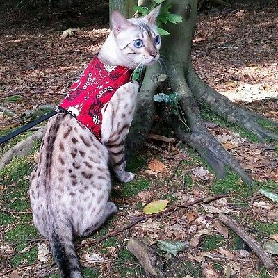 Cat Walking Harness Jacket Holster Vest ~ Butterfly Cat Jackets