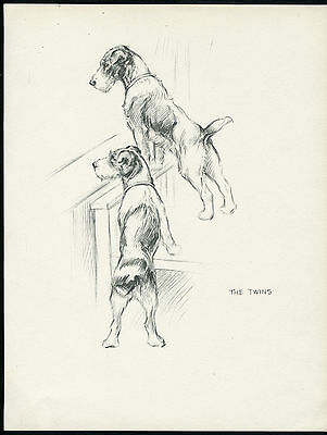 WIRE FOX TERRIER DOGS LOVELY VINTAGE 1930'S DOG ART PRINT by KF BARKER