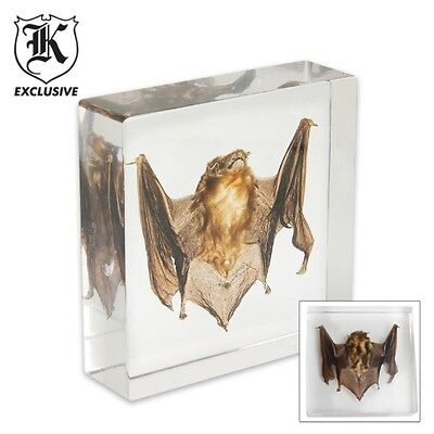 """Real Bat Paperweight Encased in Clear Lucite  3"""" x 3"""" x 3/4""""  overall -Gift Box"""
