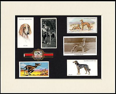 Saluki Mounted Set Of Dog Collectable Cigarette Trade Cards And Bands