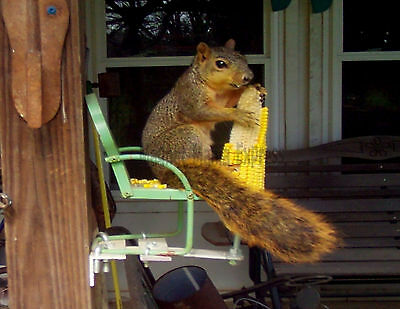 METAL REFRIGERATOR MAGNET Squirrel Eating Corn Small Lawn Chair Humor