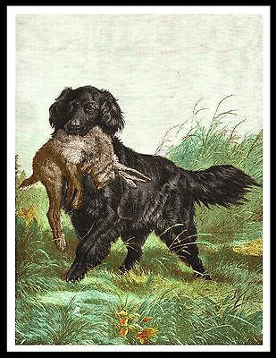 Flat Coated Retriever Dog With Rabbit Great Vintage Style Dog Print Poster